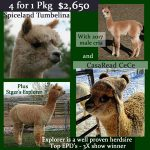 4 in 1 package Tumbelina & CeCe (mother, cria, daughter and herdsire)