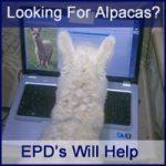 How Much Is An Alpaca Worth?