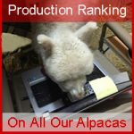 How Can You Tell If An Alpaca Is Right for Your Herd?