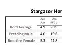 Stargazer Herd Fiber Stats