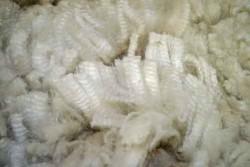 alpaca picture4 39164